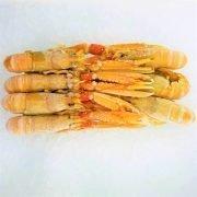 Frozen Denmark Langoustine Scampi Norway Lobster Whole Large 1kg Inside