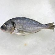 Frozen Sea Bream Mediterranean Whole Fish Gutted 250g Unpack