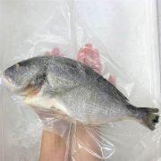 Frozen Sea Bream Mediterranean Whole Fish Gutted 400g Hand