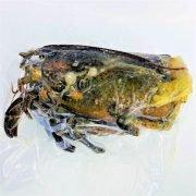 Frozen Usa Canada Lobster Shells 1kg Pack