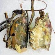 Frozen Usa Canada Lobster Shells 1kg Unpack