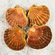 Air Flown Scotland Fresh Diver Scallop Whole Shell On 9cm 12cm Front