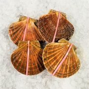 Air Flown Scotland Fresh Diver Scallop Whole Shell On 9cm 12cm Ruberband