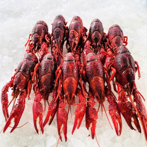 Frozen China Crayfish Crawfish Cooked In Brine Whole 1kg Inside