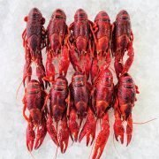 Frozen China Crayfish Crawfish Cooked In Brine Whole 1kg Inside Top