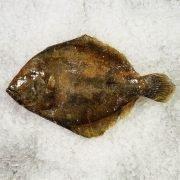 Frozen Denmark Brill Whole Fish Gutted 1.2kg Unpack