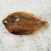 Frozen New Zealand Lemon Sole Whole Fish Gutted 400g Unpack Skin