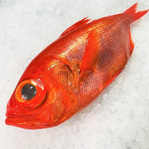 Air Flown Japan Fresh Red Alfonsino Kinmedai Whole 900g Diagonally