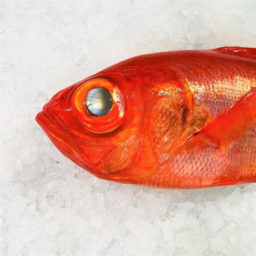 Air Flown Japan Fresh Red Alfonsino Kinmedai Whole 900g Face Zoom