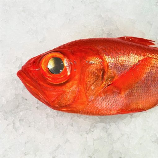 Air Flown Japan Fresh Red Alfonsino Kinmedai Whole 900g Side
