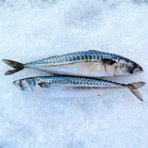 Frozen Norway Saba Mackerel Whole Fish 2 Pieces 900g Unpack