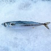 Frozen Norway Saba Mackerel Whole Fish 450g Unpack Left