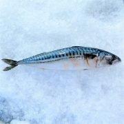 Frozen Norway Saba Mackerel Whole Fish 450g Unpack Right