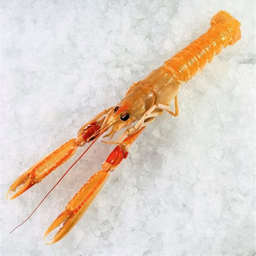 Air Flown Netherland Fresh Langoustine Scampi Norway Lobster Whole Shell On 1pc Top