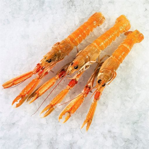 Air Flown Netherland Fresh Langoustine Scampi Norway Lobster Whole Shell On 3pc