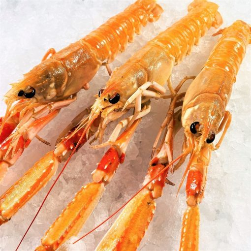 Air Flown Netherland Fresh Langoustine Scampi Norway Lobster Whole Shell On 3pc Diagonally