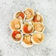 Frozen Shell China Half Shell Scallops 9 10pcs Unpack Top