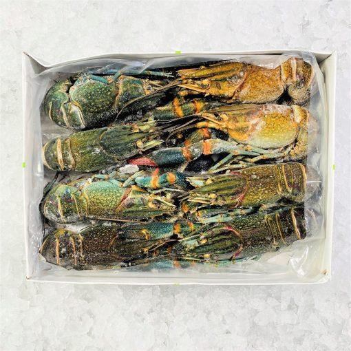 Frozen Malysia Crayfish Whole Raw Shell On 6 8pcs 1kg Unbox