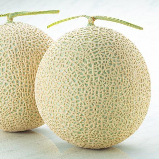 Air Flown Japan Fresh Fruit Crawn Musk Melon 1 1.5kg