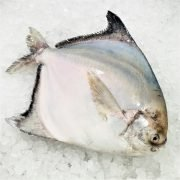 Local Frozen Fish Indonesia Pomfret Whole Diagonally