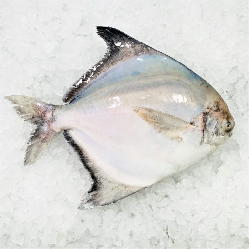 Local Frozen Fish Indonesia Pomfret Whole Top