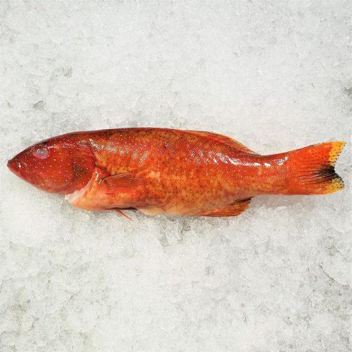 Local Frozen Fish Indonesia Red Grouper Unpack Top