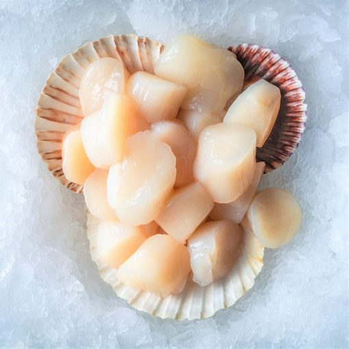 Sea Delicacies. Fresh Seafood. Scallops On Ice.