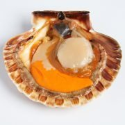 Air Flown Scotland Fresh Diver Scallop Whole Shell On 9cm 12cm Inside