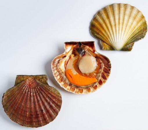 Air Flown Scotland Fresh Diver Scallop Whole Shell On 9cm 12cm Inside 3pcs