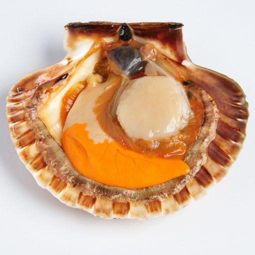 Air Flown Scotland Fresh Diver Scallop Whole Shell On 9cm 12cm Inside