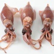 Air Flown Fresh Japan Boiled Firefly Squid Hotaru‐ika