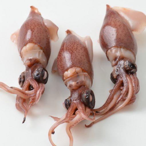 Air Flown Fresh Japan Boiled Firefly Squid Hotaru‐ika Square
