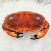 Frozen Ireland Brown Crab Whole Cooked 800 1000g Unpack Defrost