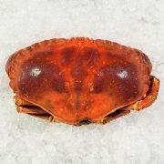 Frozen Ireland Brown Crab Whole Cooked 800 1000g Unpack Frozen
